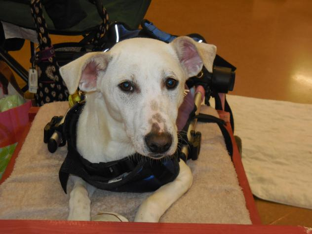 Second Chance 4 Pets Network: Won't You Please Give Cleo a Chance at a Forever Home