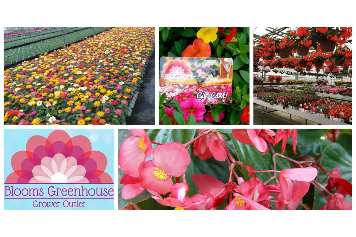 Blooms Greenhouse Grower Outlet's guide for convenient gardening